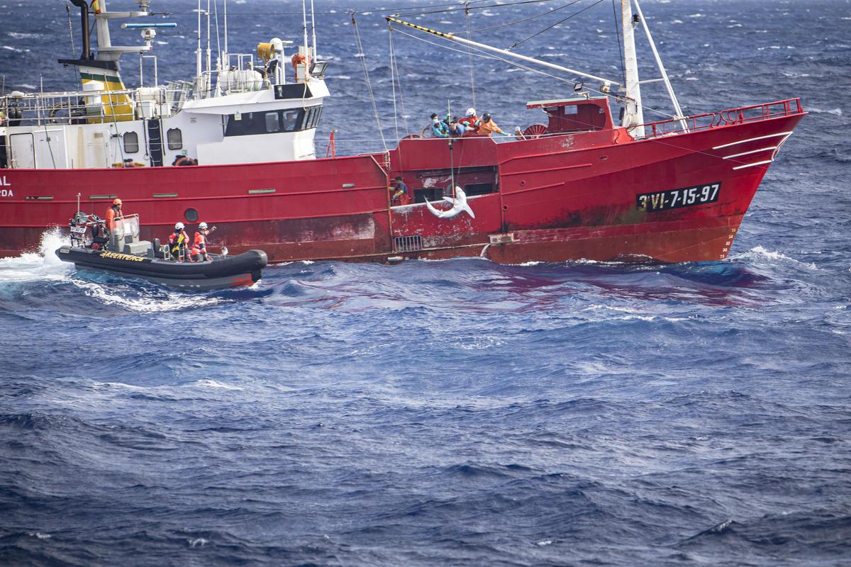 Greenpeace Investigates the Catching of a Shark. © Kajsa Sjölander / Greenpeace