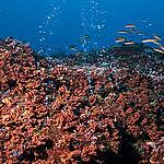 Did life on Earth begin in the deep sea?