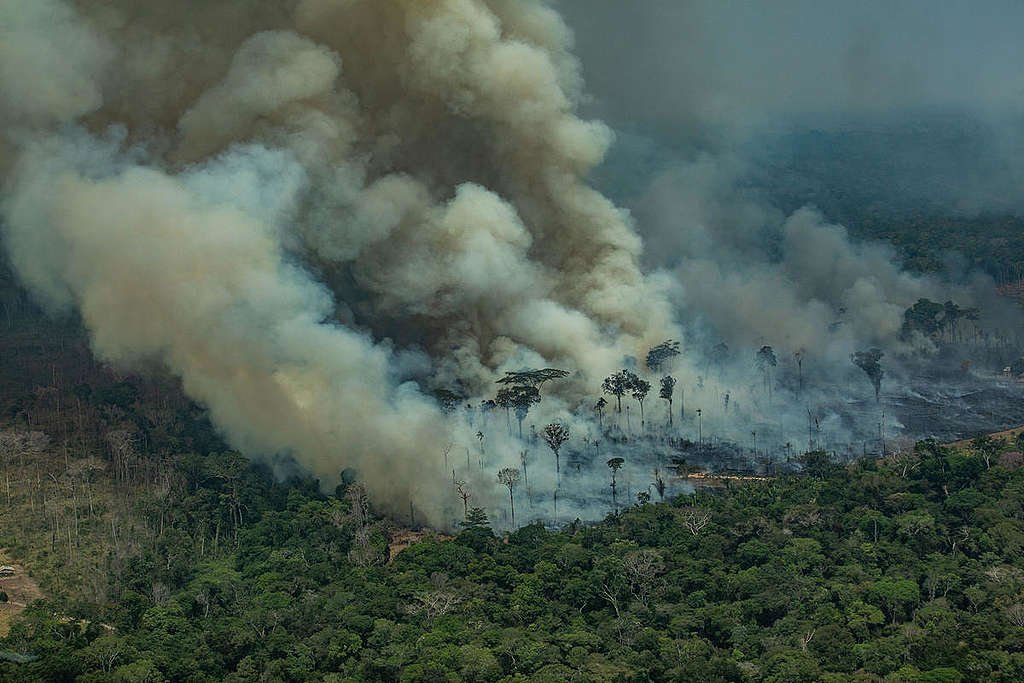 In 2019, the images of the fires raging in the Amazon went viral and shocked the world © Victor Moriyama / Greenpeace