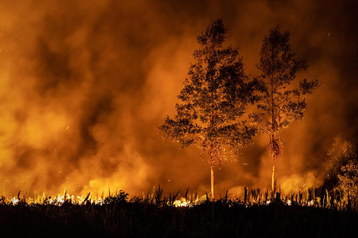 Forest Fires in Jekan Raya, Central Kalimantan. © Ulet Ifansasti / Greenpeace