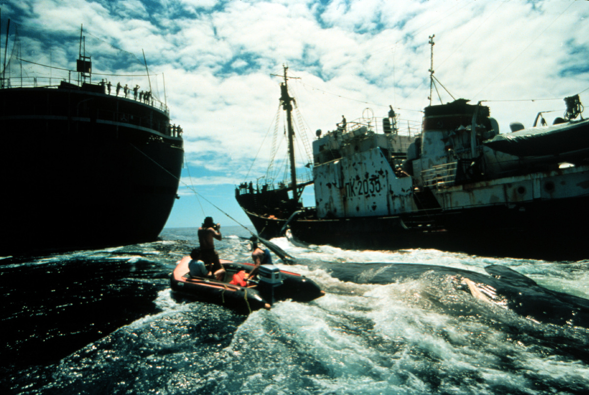 Soviet Whaling Action in North Pacific. © Greenpeace / Rex Weyler