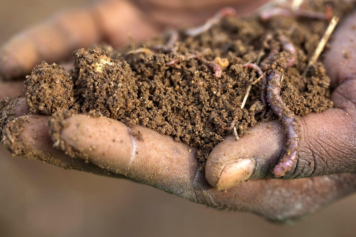 Soil in India. © Greenpeace / Vivek M.