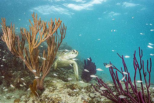 Why we need a Global Ocean Treaty