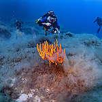 Divers and Corals at Elba Island. © Lorenzo Moscia / Greenpeace