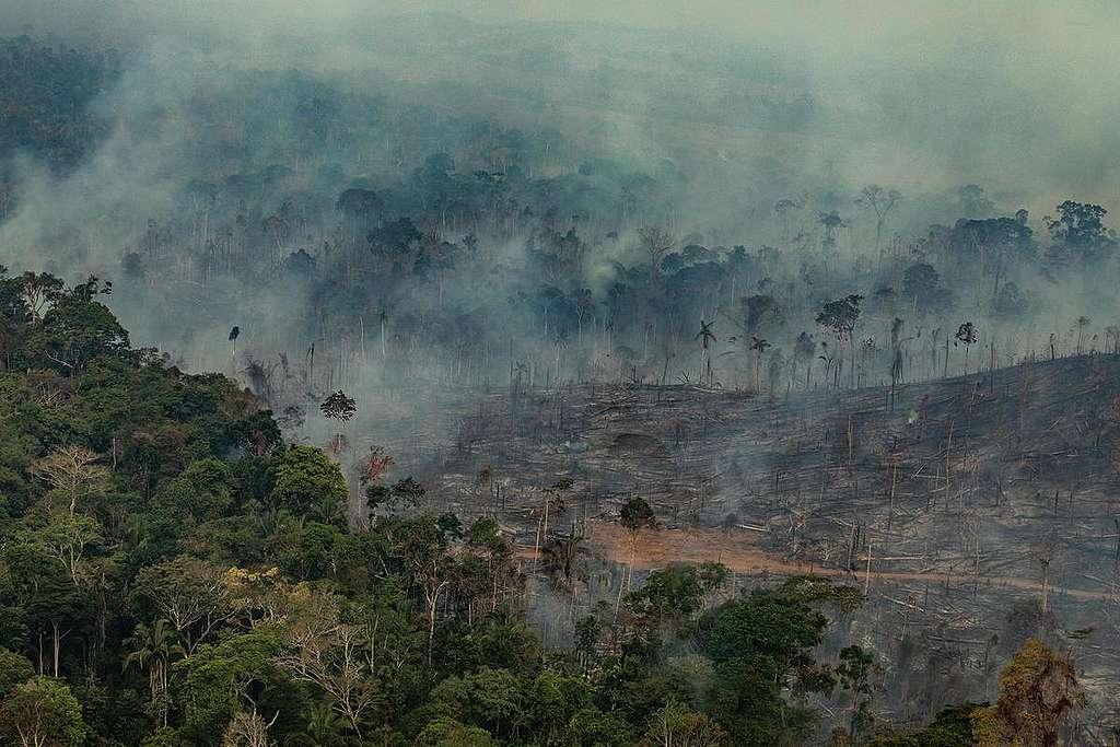 Forest Fires in Porto Velho, Rondônia, Amazon - Third Overflight (2019). © Victor Moriyama / Greenpeace