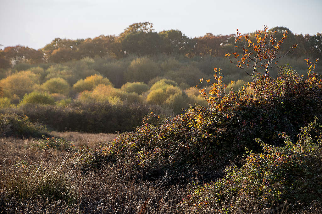 Autumn at Knepp farm © Charlie Burrell