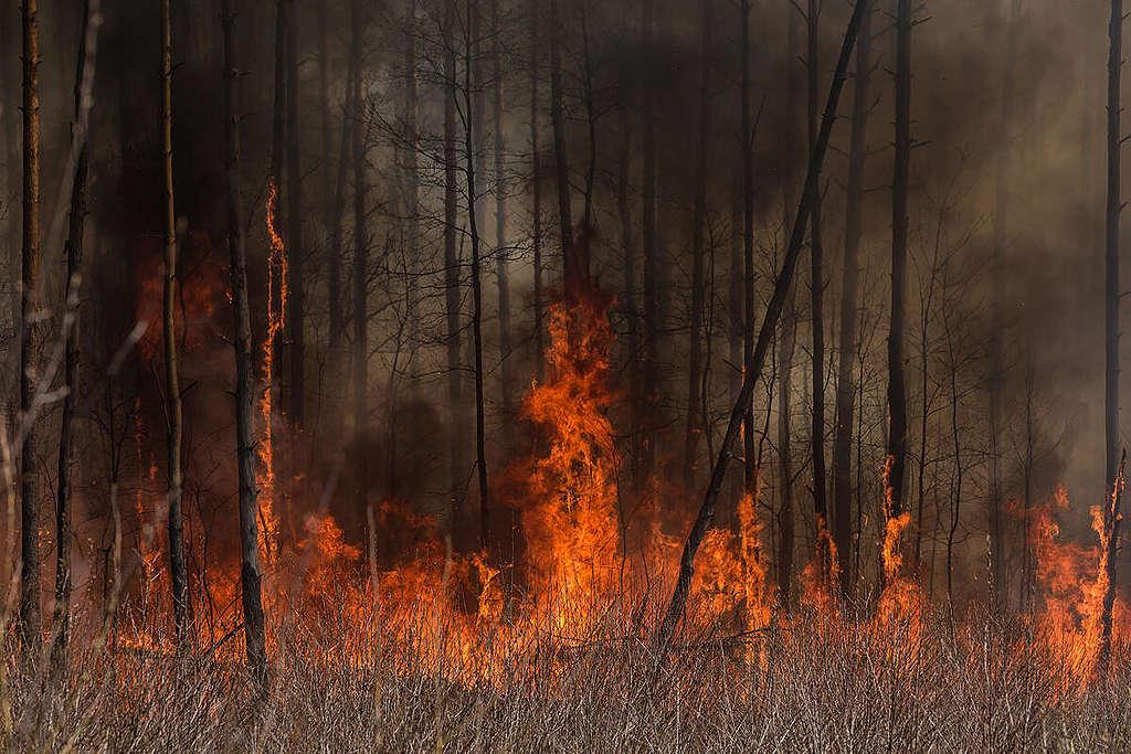 Forest Fire near Chernobyl. © Oksana Parafeniuk / Greenpeace