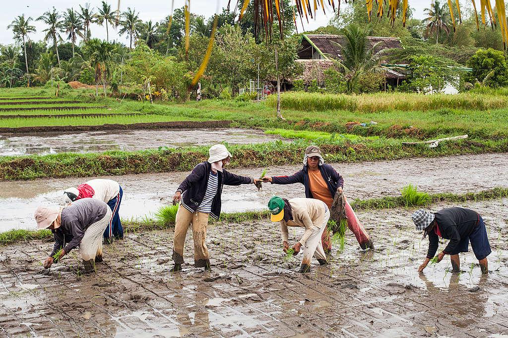 Organic Farming in Negros. © Andri Tambunan / Greenpeace
