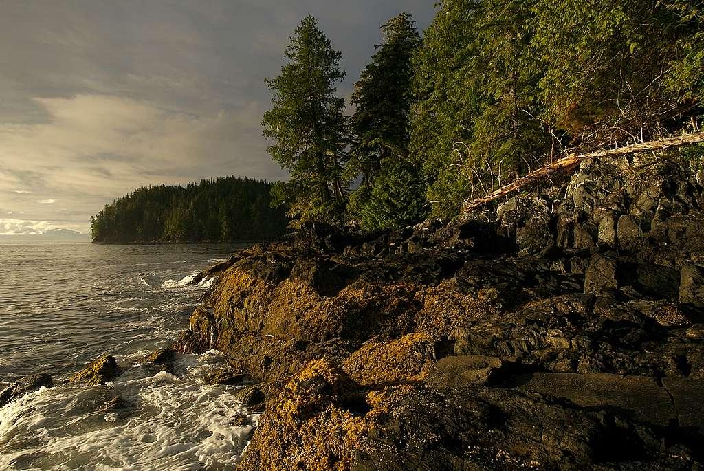 Great Bear Rainforest in B.C. © Markus Mauthe / Greenpeace