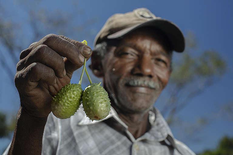 Fruits Produced in the Cerrado Biome, Brazil. © Marizilda Cruppe / Greenpeace