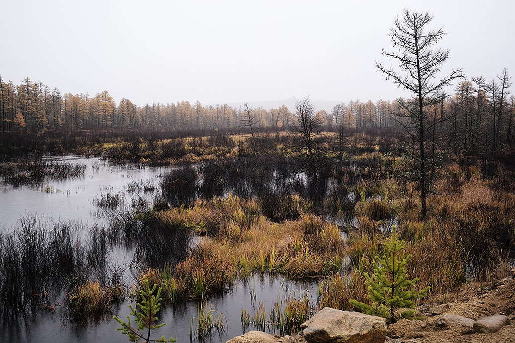 Intact Forest Landscapes on Greater Khingan Mountains in China. © Shi bai Xiao / Greenpeace