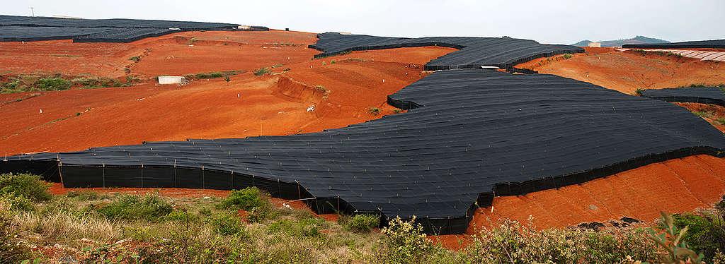Panax Pseudoginseng Farm in Yunnan. © Simon Lim / Greenpeace
