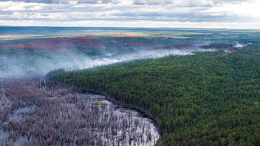 Climate Emergency in Siberia 2020. © Julia Petrenko / Greenpeace