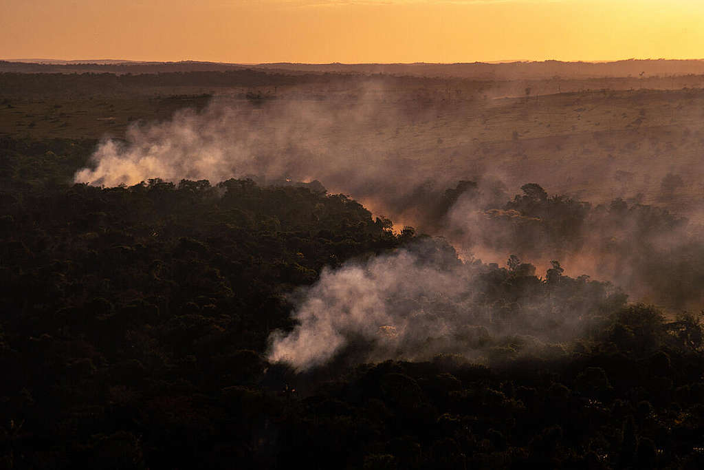 Greenpeace Brazil captured images of fires raging in the Amazon in the state of Mato Grosso.