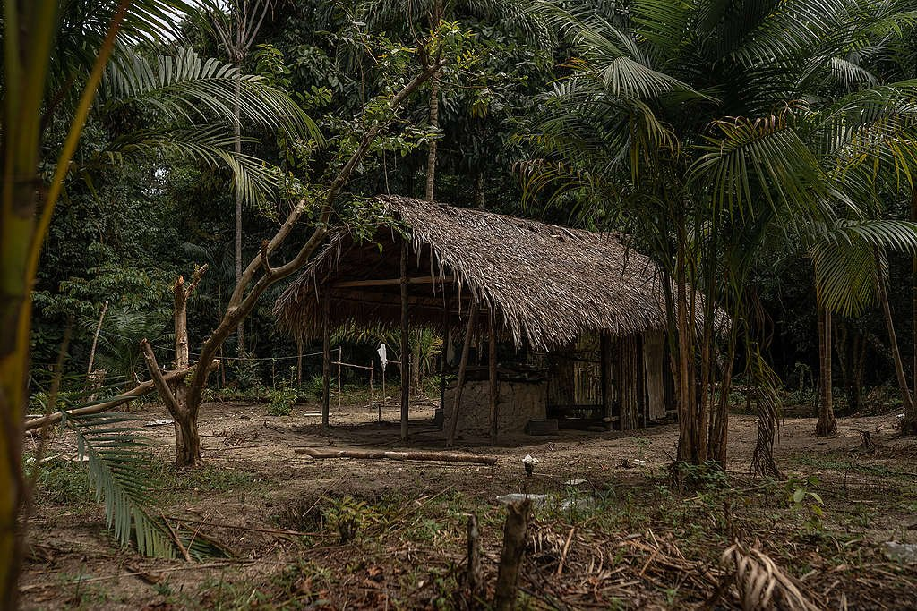 One of the shelters families from the Dâw people used to isolate themselves, inside the forest. © Christian Braga / Greenpeace