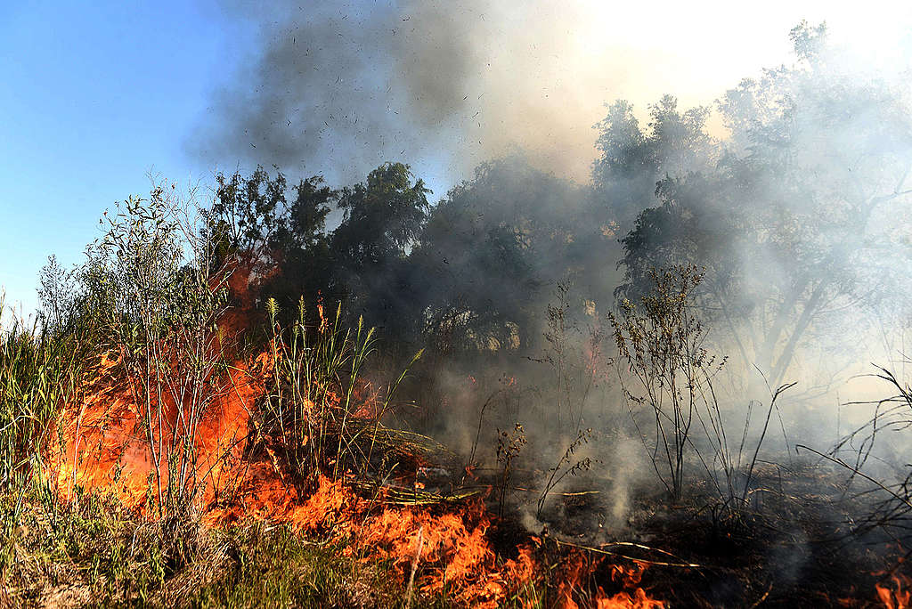 Fires burn in the Paraná Delta, Argentina. © Sebastian Suarez Meccia / Greenpeace
