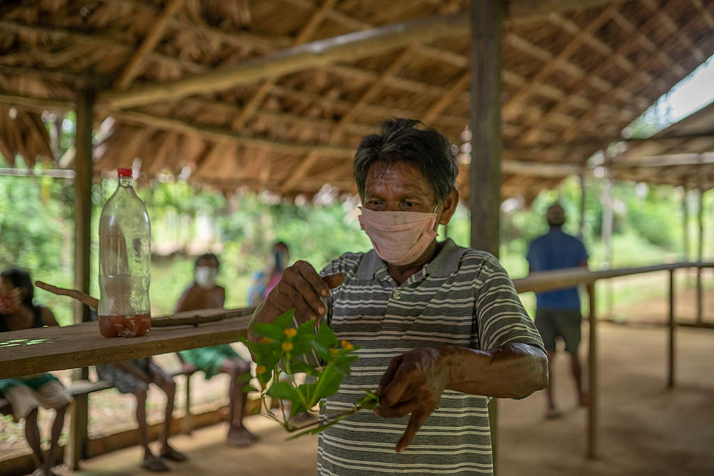 Jair handles the plants and tea his people used to help them cope from COVID-19. © Christian Braga / Greenpeace