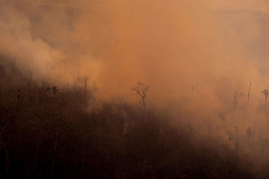 Fire Moratorium - Deforestation and Fire Monitoring in the Amazon in August, 2020. © Christian Braga / Greenpeace