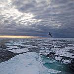 Icescape in the Arctic. © Daniella Zalcman / Greenpeace