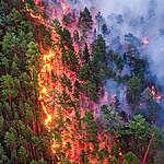 Climate Emergency: Forest Fires in Siberia. © Julia Petrenko / Greenpeace