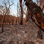 Fires have devastated 23% of Pantanal's biome © Leandro Cagiano / Greenpeace