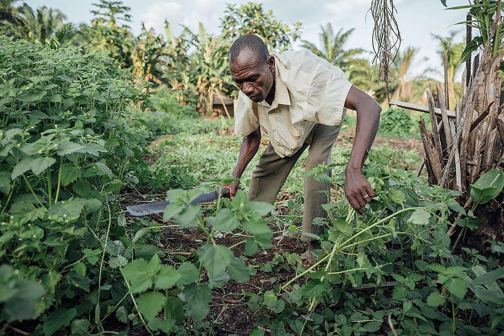 Farmer working in his Field in village of Lokolama. © Kevin McElvaney / Greenpeace