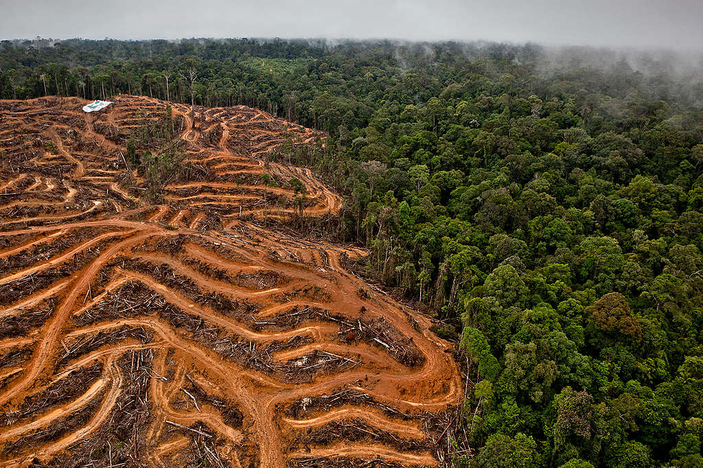 Action at P & G Palm Oil Supplier in Kalimantan. © Ulet  Ifansasti / Greenpeace