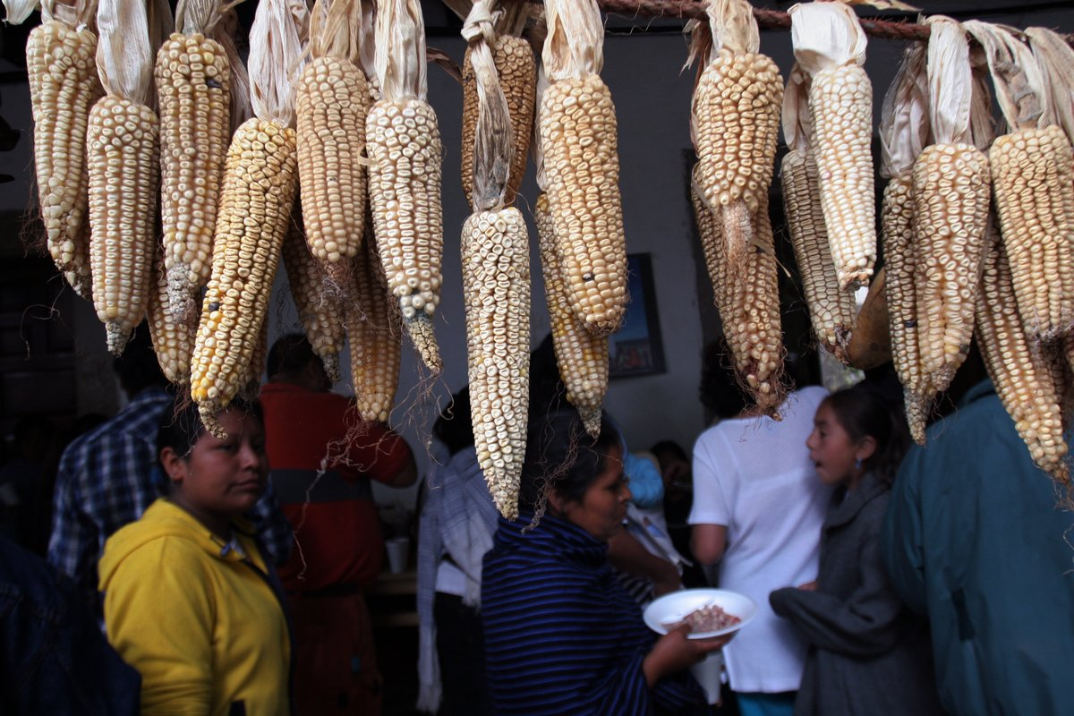 Mexico banned GMOs. What are the next steps? - Greenpeace International
