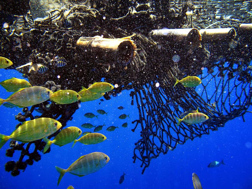 FAD in the Indian Ocean. © Jiri Rezac / Greenpeace