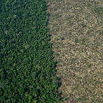 Deforestation in the Karipuna Indigenous Land in the Amazon. © Christian Braga / Greenpeace