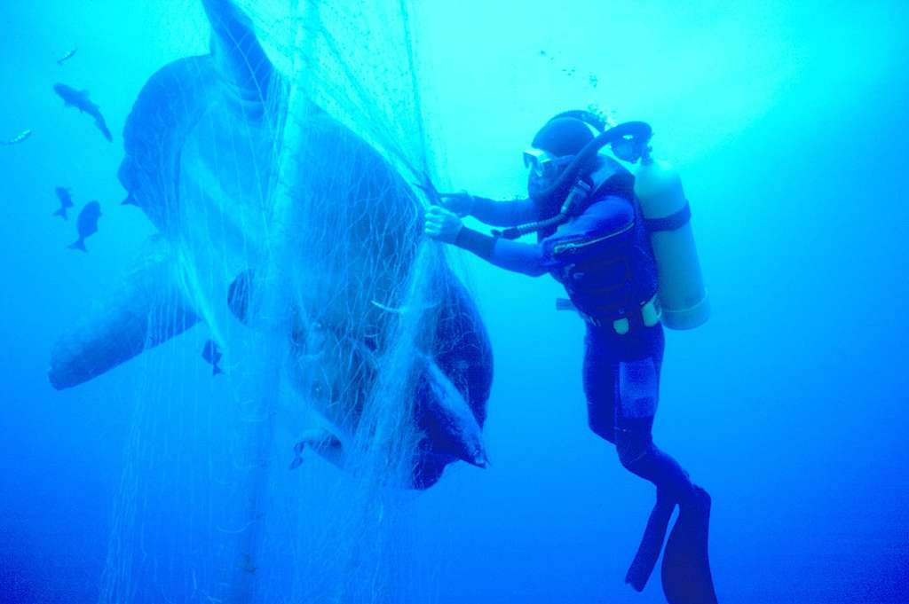 Diver Rescues Sunfish from Japanese Driftnet. © Greenpeace / Roger Grace