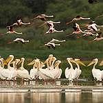 Wildlife in the Savanna in Tanzania. © Markus Mauthe / Greenpeace