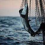 Walls of death: fisheries threaten livelihoods in the Indian Ocean, report reveals