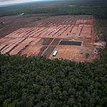 Deforestation in Papua. © Ardiles Rante / Greenpeace