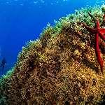 Underwater Sea Temperature Monitoring Station in Sardinia. © Greenpeace / Lorenzo Moscia