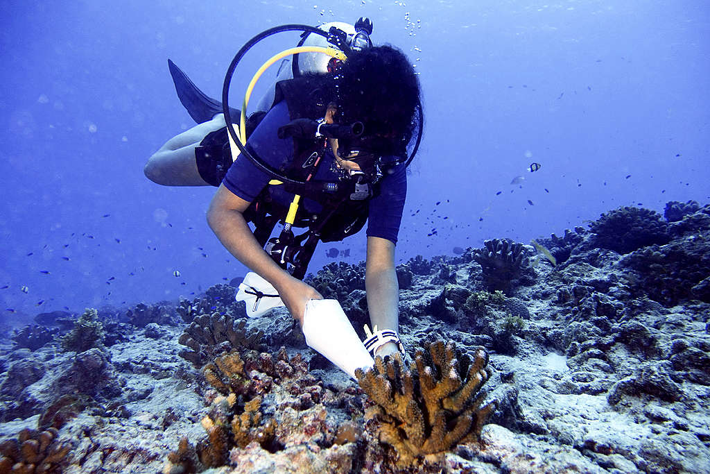 Athina planting a nursery grown coral at a degraded site within the Cousin Island MPA. © Roshni Yathiraj