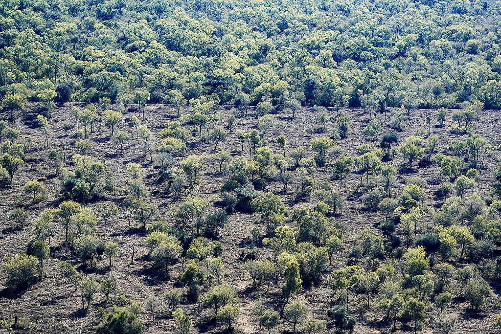 Progression of deforestation in Chaco province of Argentina. ©Alejandro Espeche / Greenpeace