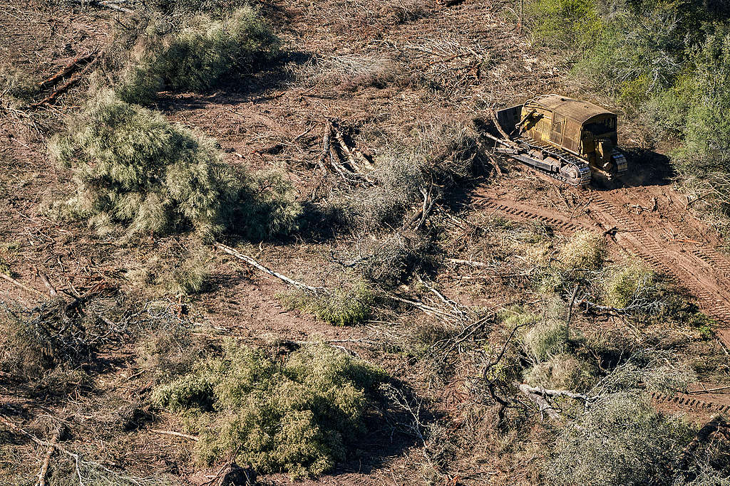 Cut down trees and branches next to a bulldozer in Chaco province of Argentina. © Alejandro Espeche / Greenpeace