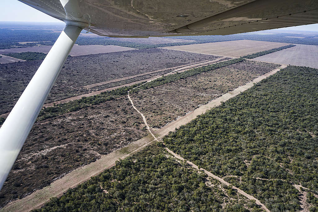 Flyover deforested land in Chaco region of Argentina. © Alejandro Espeche / Greenpeace