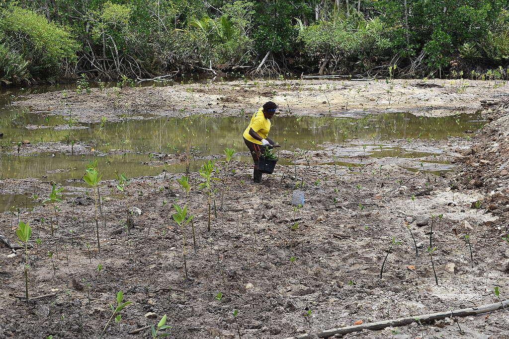 Seedlings being planted © EBA project Seychelles