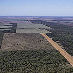 Overhead shot of forest clearing in the Chaco province of Argentina. © Alejandro Espeche / Greenpeace