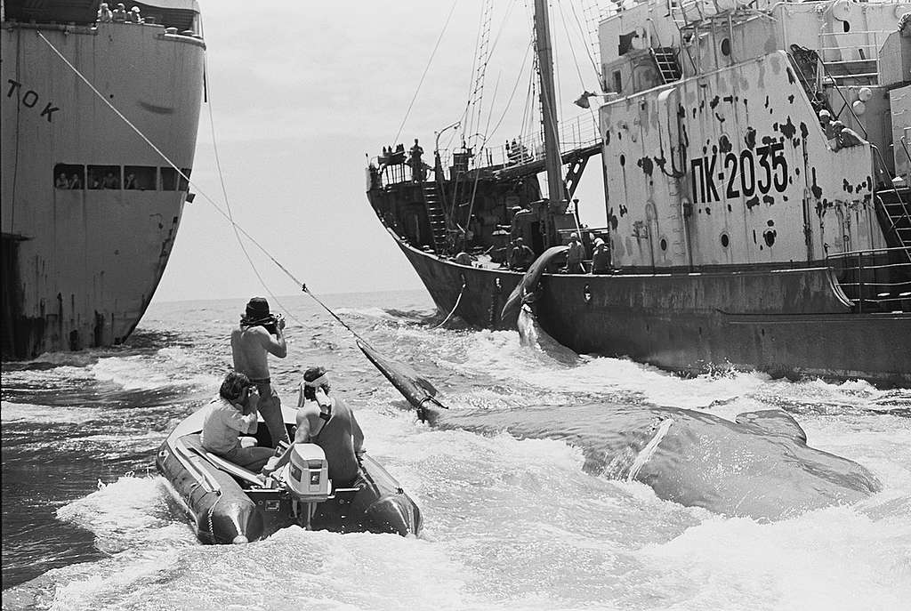 Photographers Matt Herron and Kazumi Tanaka capture the process of transferring dead whales from the harpoon ships to the factory ship Dalnyi Vostok, in the Pacific Ocean, 1976. © Greenpeace / Rex Weyler