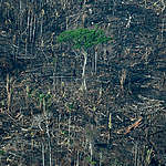 Deforestation and forest fires of over 100 hectares inside the Karipuna Indigenous Land, near Formoso River, in Nova Mamoré, Rondônia state. The Karipuna People, Greenpeace and CIMI (Indigenist Missionary Council) monitored the Karipuna Indigenous Land, in Rondônia state, in September 2021, registering a 44% increase in deforestation between August 2020 and July 2021. Along with deforestation, cattle raising and soya production have also been increasing in the state, putting pressure on local Indigenous People and threatening their lands. Inside the Karipuna Land, new deforestation spots, bridges and machinery are proof of constant invasion and land-grabbing in the region.