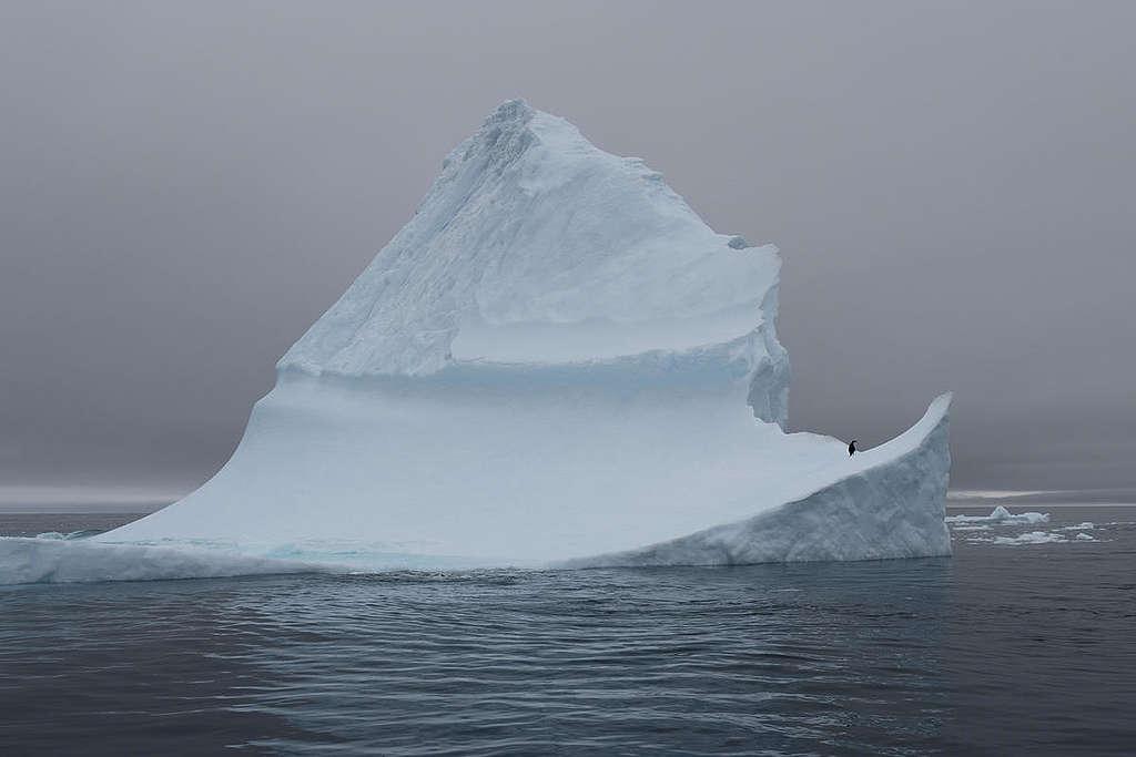 Penguin on Iceberg in Antarctica. © Christian Åslund / Greenpeace