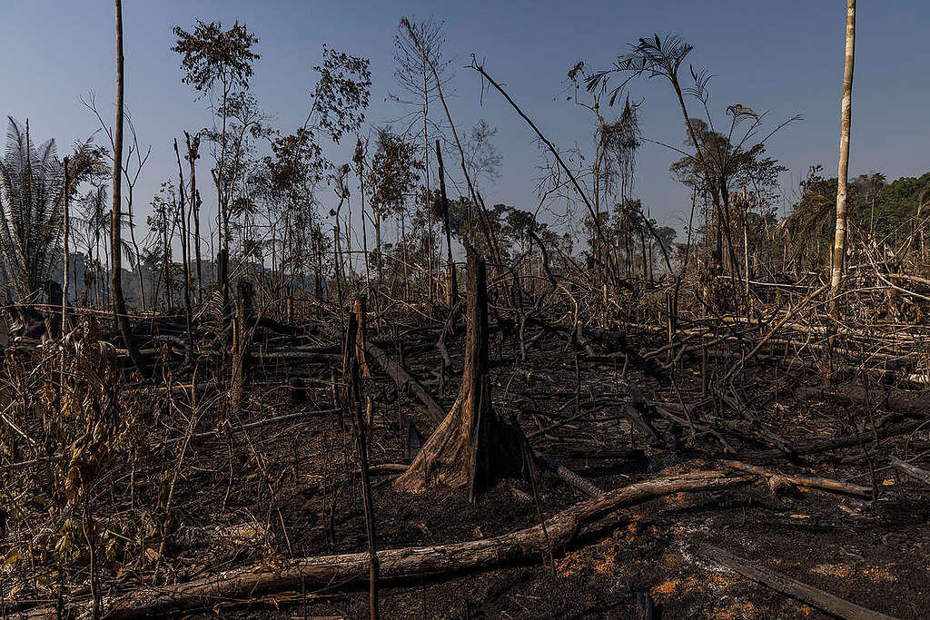 Area of forest destroyed by fires in the Amazon.