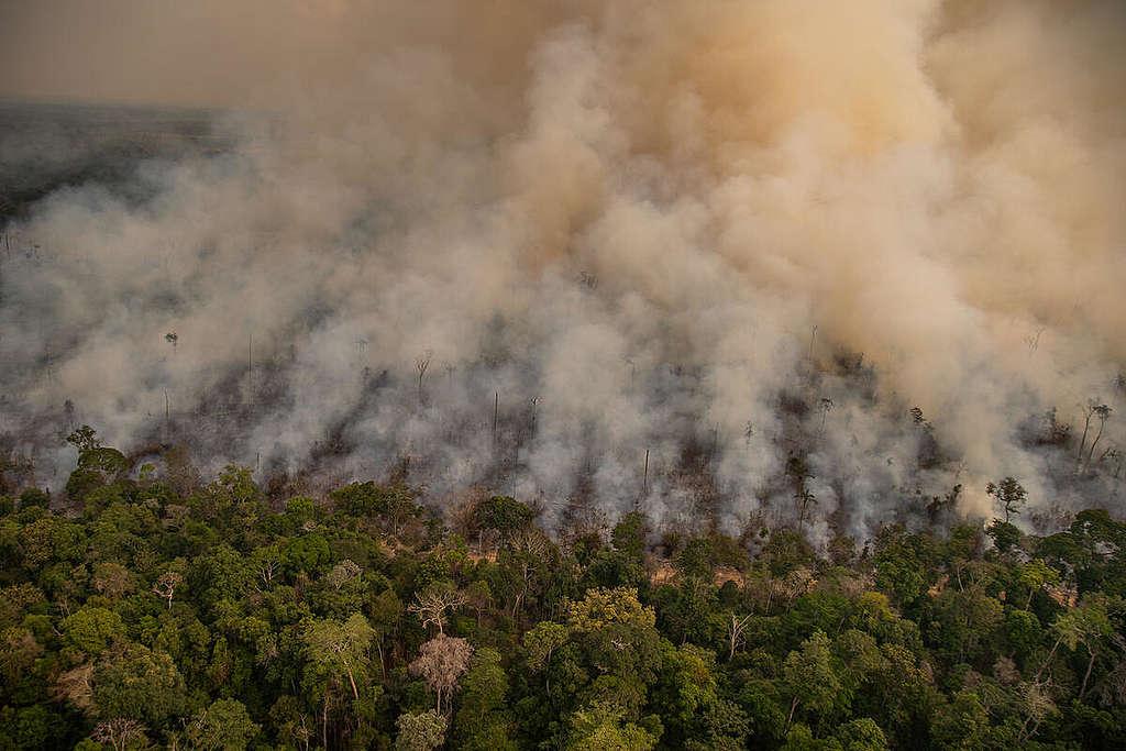 The Amazon on fire © Christian Braga / Greenpeace