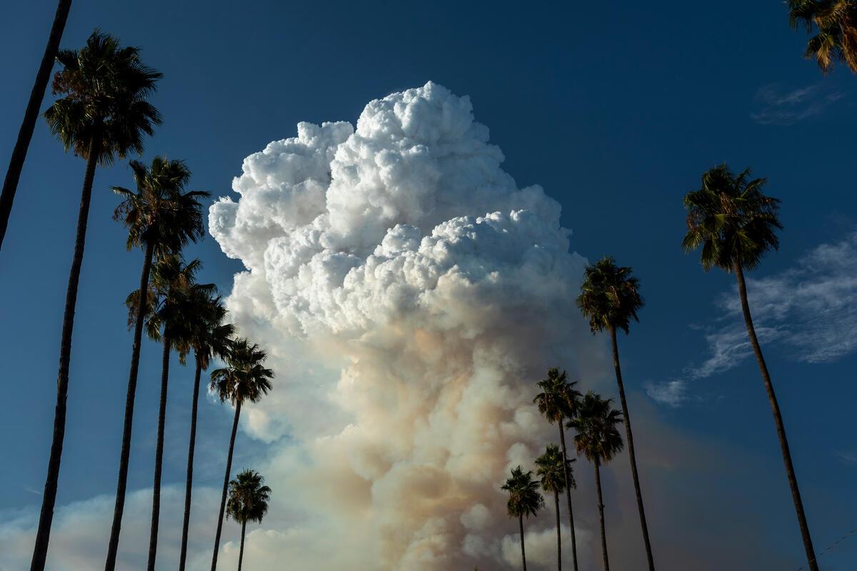 California  © David McNew / Greenpeace