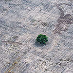 Deforestation for Farming and Agriculture in Chaco Province, Argentina © Martin Katz / Greenpeace