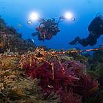 Marine Wildlife at Vema Seamount. © Richard Barnden / Greenpeace