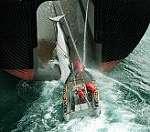 רטרו: הכל על המאבק בצייד לוויתנים